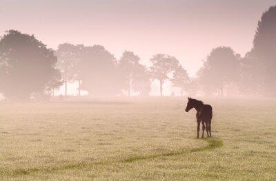 Quadro silhouette puledro al pascolo nella nebbia