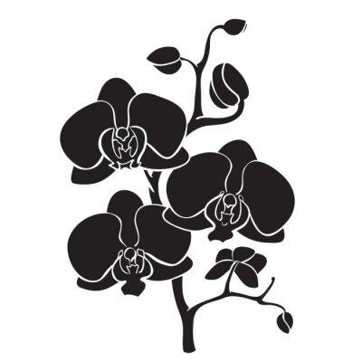 Quadro Silhouette ramo di orchidea