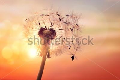 Quadro Siluetta del dente di leone contro il tramonto con i semi che soffiano nel vento