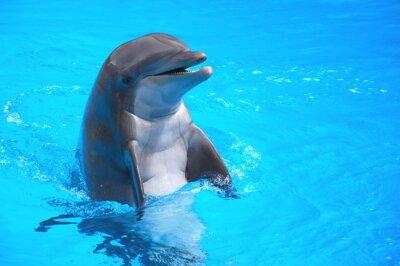 Quadro Śmiejący się w delfin Loro Park na Teneryfie