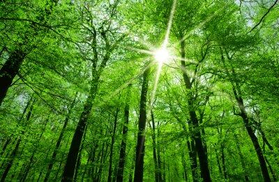 Quadro sole splende attraverso i rami degli alberi