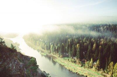 Quadro spessa nebbia del mattino nella foresta di conifere. conifere, folto della foresta verde.