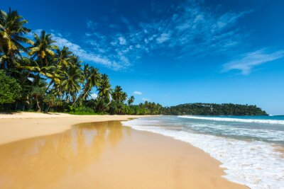 Quadro Spiaggia idilliaca. Sri Lanka