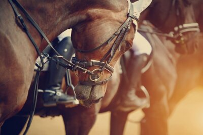 Quadro Sports brown horses before competitions.