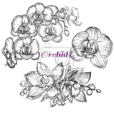 Quadro stile schizzo nero orchidea
