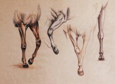 Quadro studio gambe del cavallo