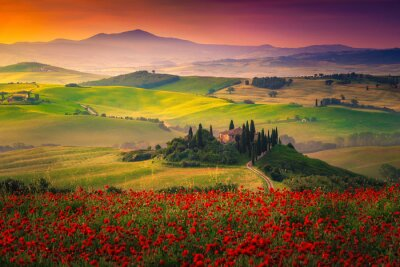 Quadro Stunning red poppies blossom on meadows in Tuscany, Pienza, Italy