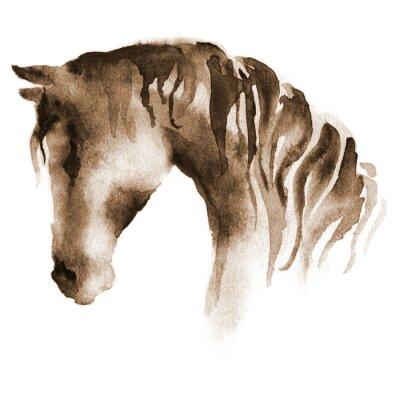 Quadro Testa di cavallo bagnato acquarello. dipinto a mano cavallo marrone su fondo bianco.