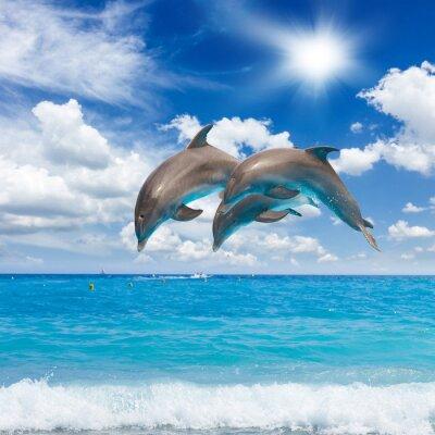 Quadro three  jumping dolphins