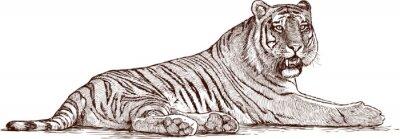 Quadro tigre sdraiato