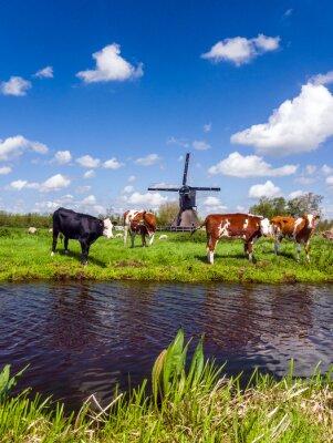 Quadro Tipico paesaggio olandese con mucche nel prato e un mulino a vento vicino all'acqua