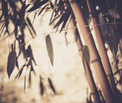 Quadro Tonica immagine di una pianta di bambù