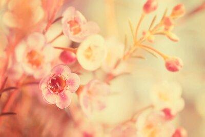 Quadro tono dolce e fiori soft focus