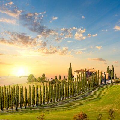 Quadro Toscana al tramonto - strada di campagna con alberi e casa