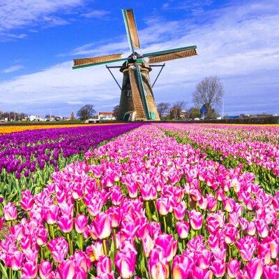 Quadro tradizionali Holland campagna - mulini a vento e tulipani