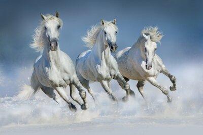Quadro Tre cavallo bianco al galoppo eseguito in neve