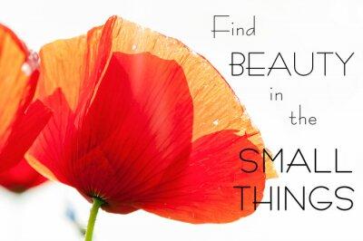 Quadro Trovare la bellezza nelle piccole cose. La motivazione citazione ispiratore