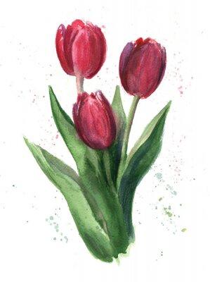 Quadro Tulipani, acquarello