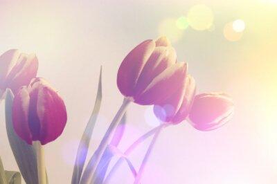 Quadro tulipani retro