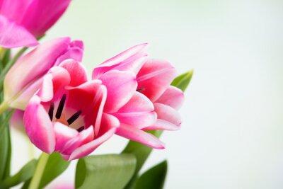 Quadro tulipano