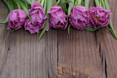 Quadro tulipany