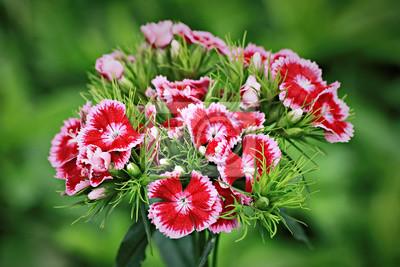 Turco dipinti da parete u quadri petali di fiori dalia garofano
