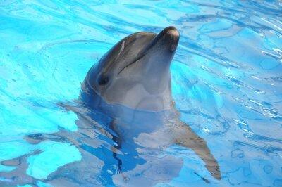 Quadro tursiope in acqua blu