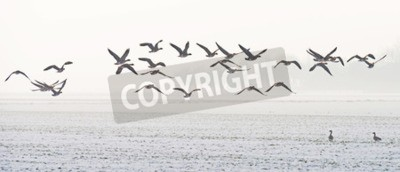 Quadro Uccelli che volano sopra un campo di neve in inverno