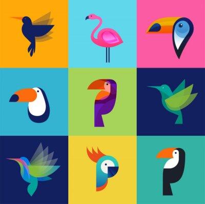 Quadro Uccelli tropicali - set di icone vettoriali