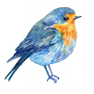 Quadro uccello su uno sfondo bianco .illustration acquerello