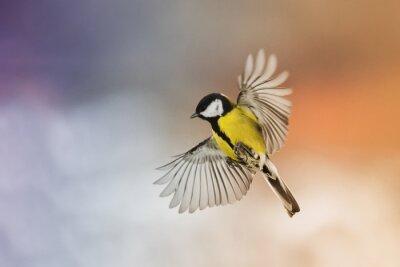Quadro uccello uccello volare allungare le ali nel cielo al tramonto