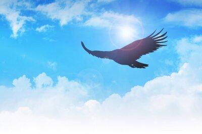 Quadro Un'aquila che vola in aria