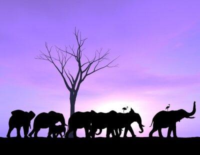 Quadro Un Elefante apre la strada come gli altri seguono con un tramonto o l'alba viola.