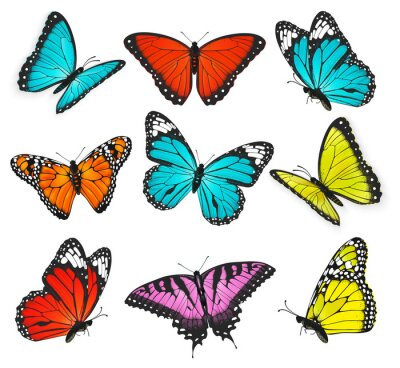Quadro un insieme di realistica farfalle colorate illustrazione