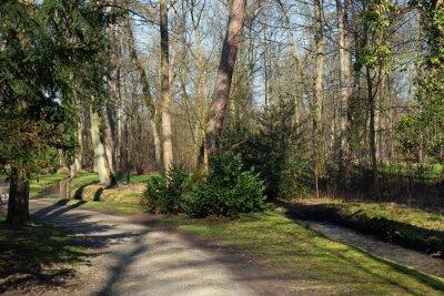 Quadro Un percorso e un piccolo ruscello nel bosco