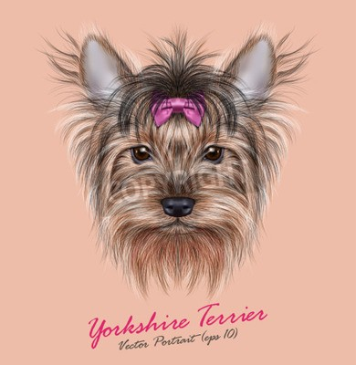 Quadro Vector Ritratto di un cane domestico. Carino testa di Yorkshire Terrier su sfondo ping.