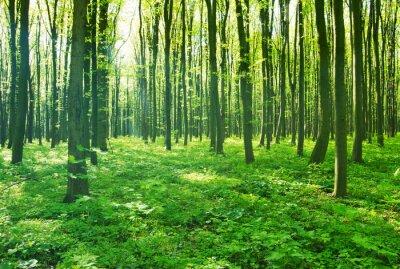 Quadro verde foresta