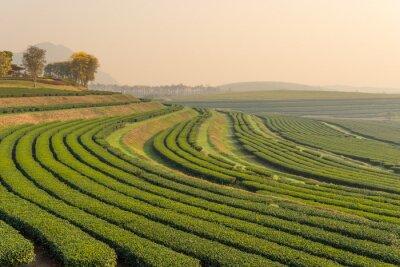 Quadro Verde modello fattoria di tè al mattino
