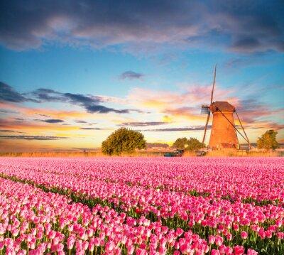Quadro Vibrante campo tulipani con mulino a vento olandese