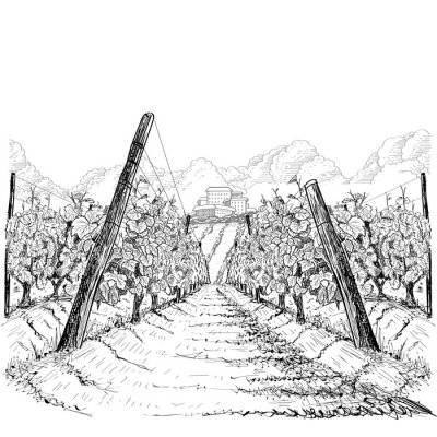 Quadro Vineyard landscape with clouds and building on the hill. Hand drawn sketch vector illustration on white