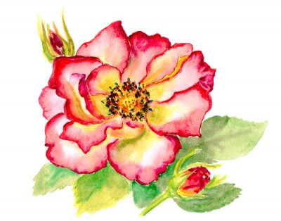 Quadro Vintage acquerello brillante rosa rossa