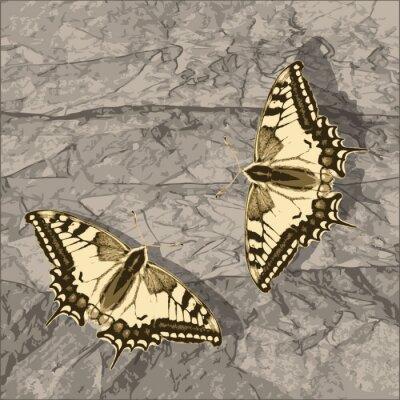 Quadro Volare farfalla sul muro grunge.