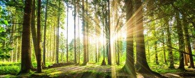 Quadro Wald mit Panorama Sonnenstrahlen