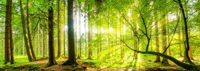 Quadro Waldpanorama con raggi di sole