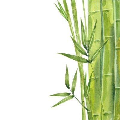 Quadro watercolor bamboo stalks