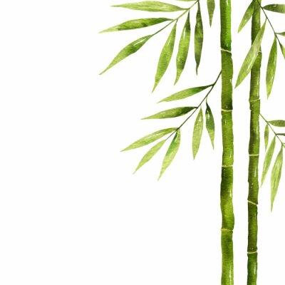 Quadro Watercolor bamboo stem with green leaves and copy space.