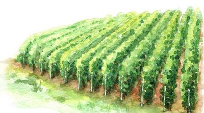 Quadro Watercolor Sketch Rural Scene Fragment of Vineyard