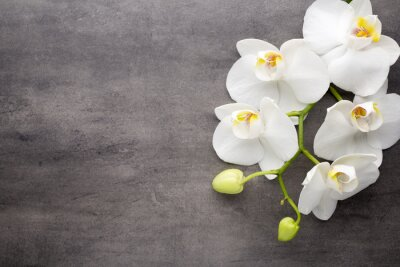 Quadro White orchid on the grey background.