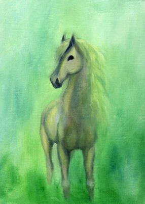 Quadro White stallion