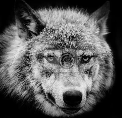 Quadro Wolf Eyes una testa in bianco e nero colpo di un lupo grigio.